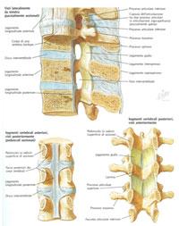 La colonna lombosacrale anatomofisiologia e for Costo medio di aggiungere un portico anteriore